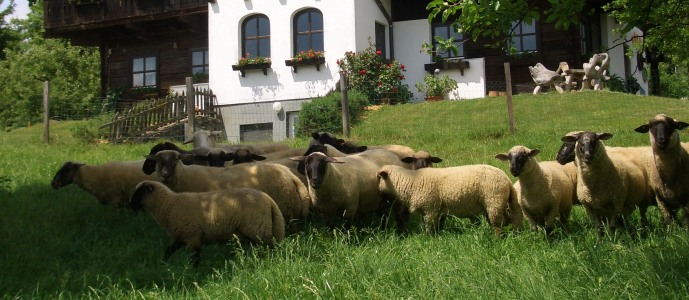 Erlebnis Haus Spiess - Maltschacher See - Warme Patschen sollte man sich leisten, kalte Füße nicht.